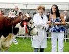 Cattle Winners at the Suffolk Show